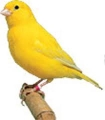 online backup canary