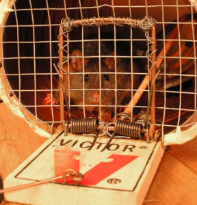Better Online Backup Mousetrap